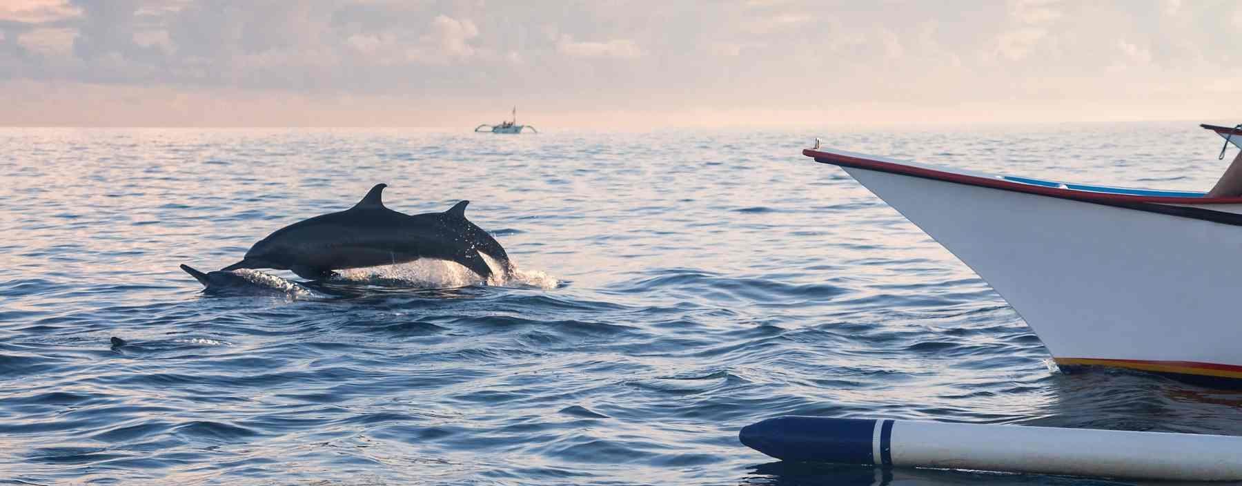 id, bali, lovina, dolphins jumping lovina beach (2).jpg