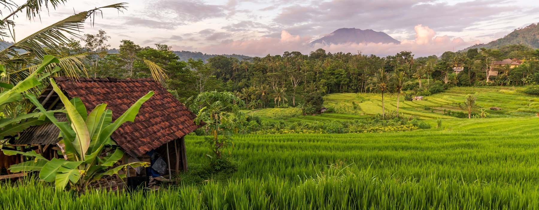 id, bali, sidemen, rijstvelden.jpg