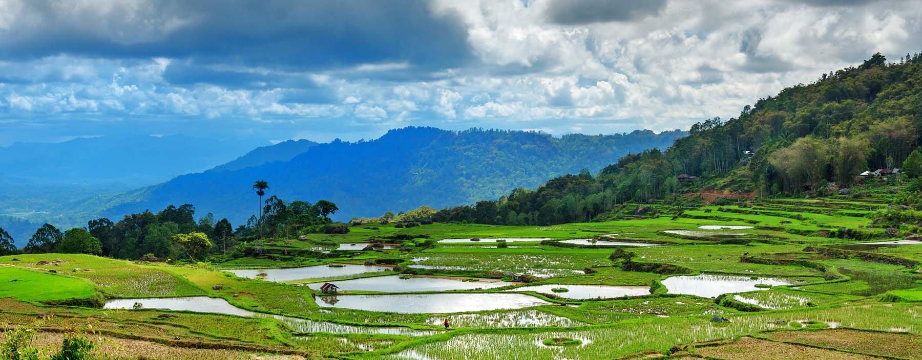 id, sulawesi, tana toraja, rice fields (5).jpg