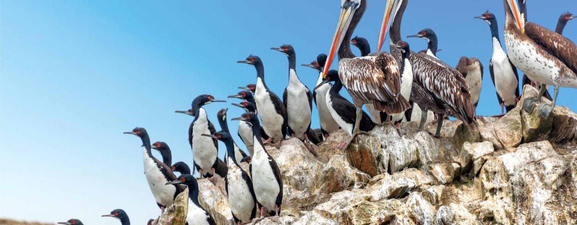 De Ballestas eilanden