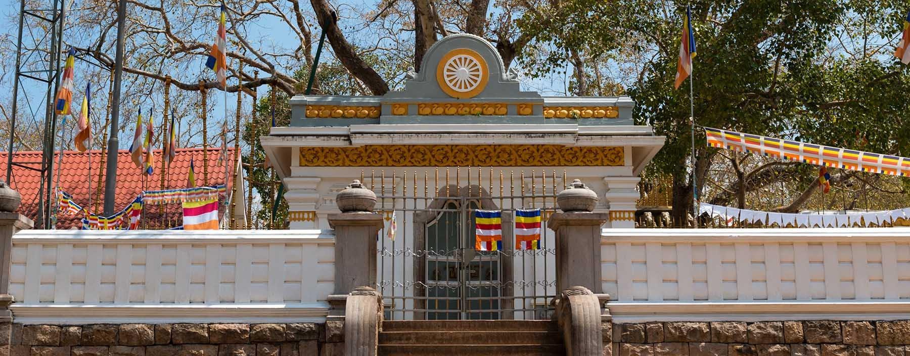 sri lanka, anuradhapura, sacred sri maha bodhi tree.jpg