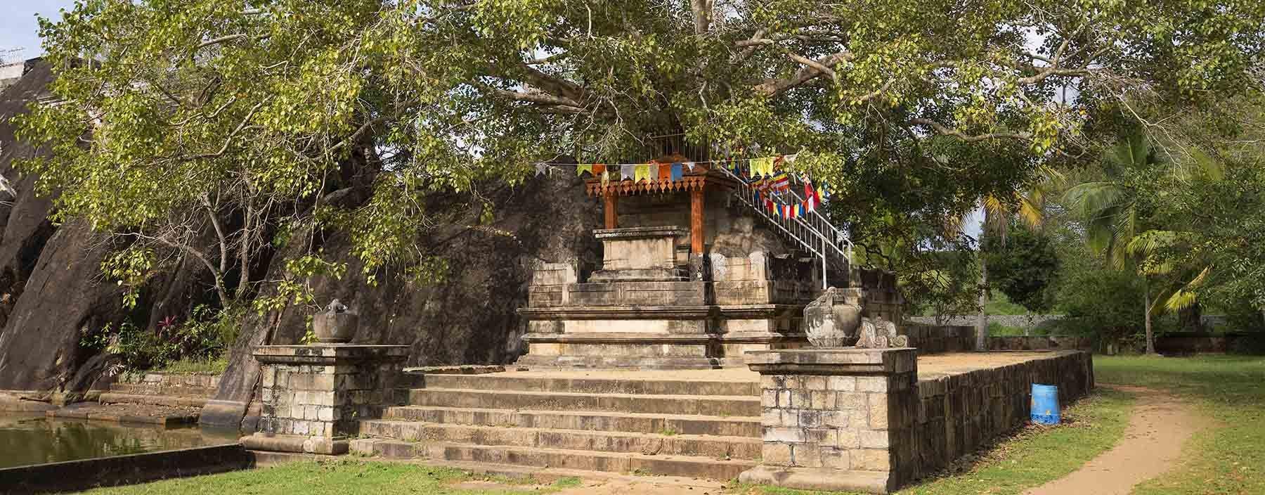 sri lanka, anuradhapura, bodhi tree.jpg
