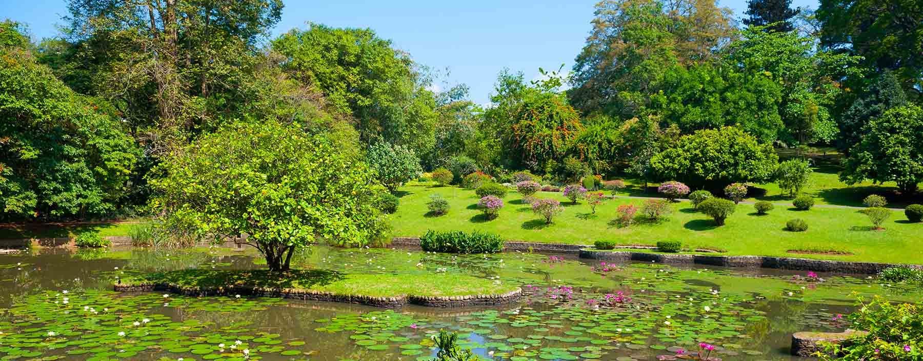 sri lanka, kandy, botanische tuinen (2).jpg