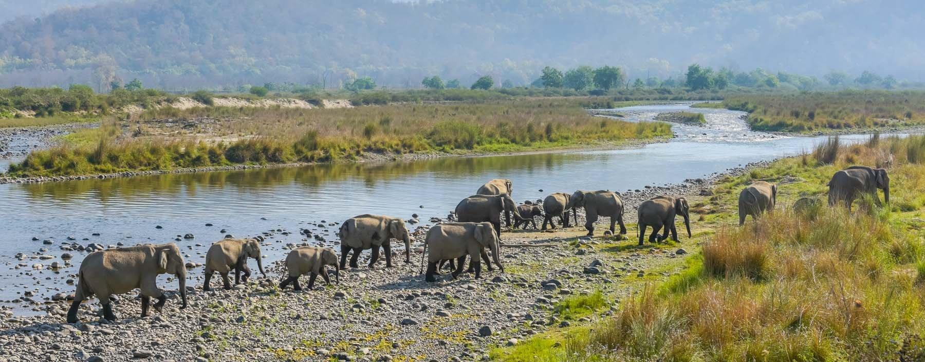 in, corbett, olifanten.jpg