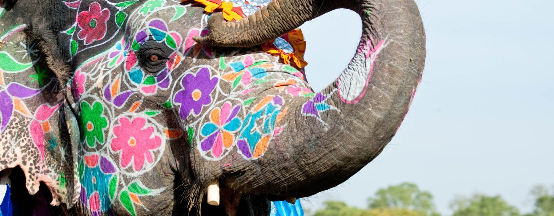 in, jaipur, painted elephant at the elephant festival.jpg