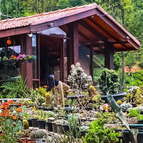 Flower Garden, Ella, Sri Lanka