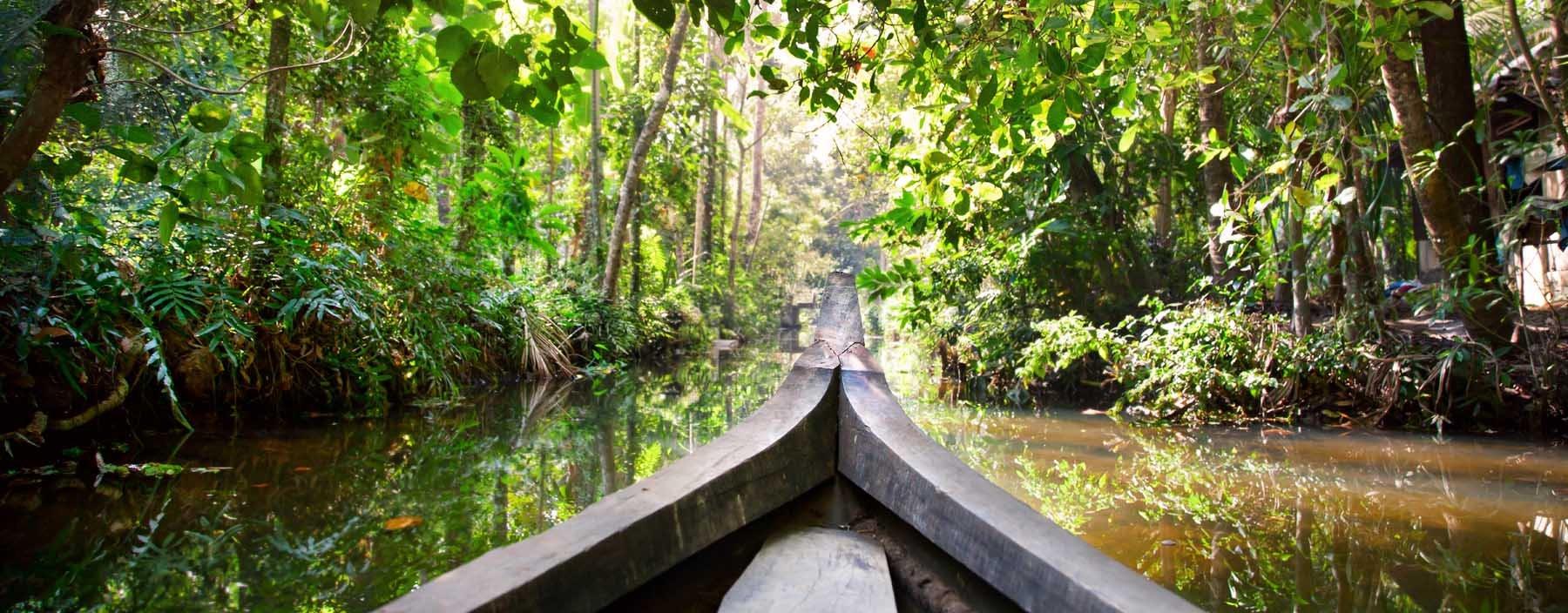 in, kerala, cruise in backwaters jungle in kochin.jpg