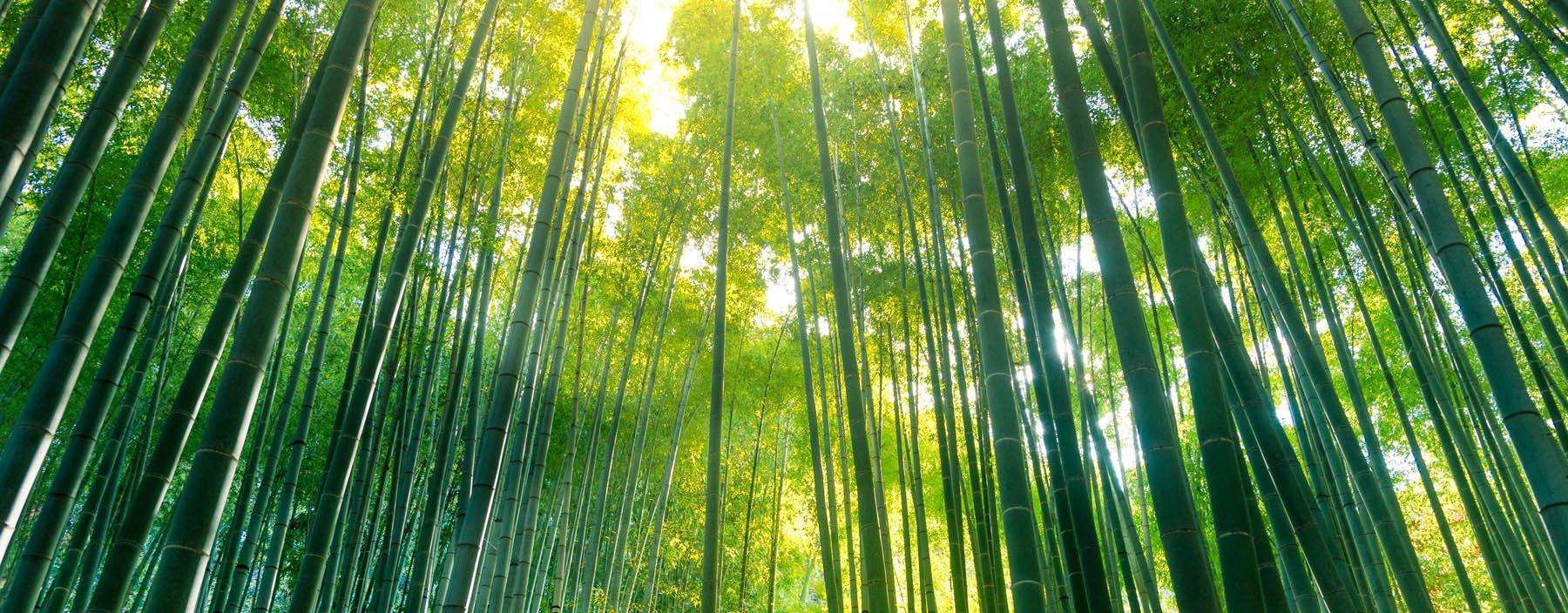 jp, kamakura, bamboe tuin.jpg