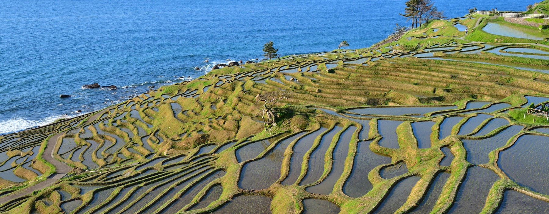 jp, noto hanto peninsula, rijstvelden (1).jpg