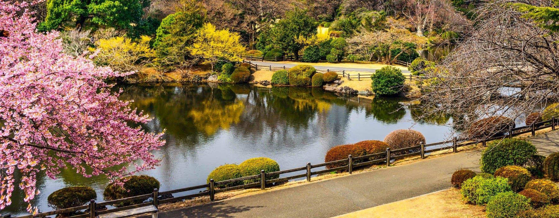 jp, tokyo, shinjuku gyoen park (1).jpg