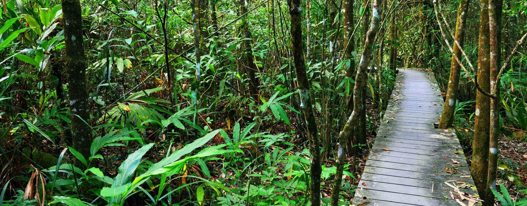 th. khao yai national park, khao yai np (7).jpg